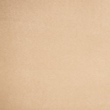 Bisque Solid Drapery and Upholstery Fabric by Trend