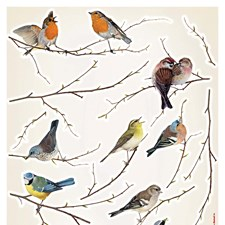 LV19005 Birds Wall Stickers by Brewster